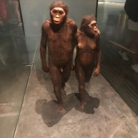 รูปภาพถ่ายที่ American Museum of Natural History Museum Shop โดย Anton M. เมื่อ 7/17/2018