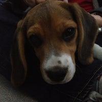 Photo taken at Animal Care Center by Jossandy Marlene S. on 5/8/2013