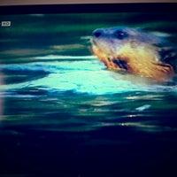 Photo taken at Nat Geo Wild by Esy on 6/9/2014