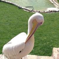 Photo taken at Barajin Zoo | باغ وحش باراجين by S.Mohammad S. on 5/10/2016