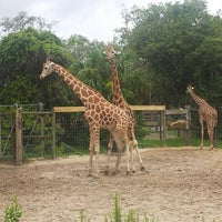 Photo taken at Tampa's Lowry Park Zoo by Aaron N. on 6/11/2013