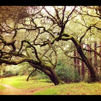 Photo taken at Joaquin Miller Park by Debbie L. on 3/11/2012