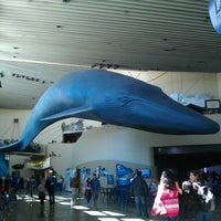 Photo taken at Aquarium of The Pacific by Nao M. on 4/1/2012