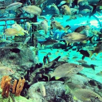 Photo taken at Ripley's Aquarium by Caitlin G. on 7/5/2012
