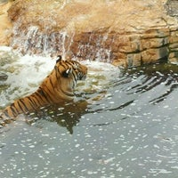 Photo taken at Tampa's Lowry Park Zoo by Laura G. on 7/23/2012