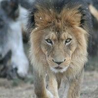 Photo taken at Denver Zoo by Jason B. on 6/5/2012