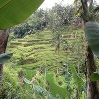 Снимок сделан в Tegallalang Rice Terraces пользователем Pohui K. 4/6/2012
