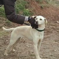 Foto tomada en Protectora De Animales por Bodega A. el 2/19/2012