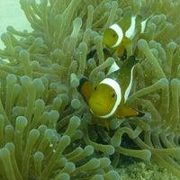 Photo taken at Bubbles Dive Resort by J K. on 5/17/2015