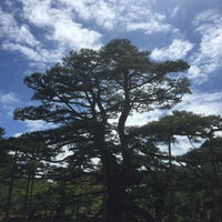 Photo taken at Neagarinomatsu Pine by Eiko S. on 6/16/2017