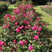 Photo taken at International Rose Test Garden by Paul N. on 6/2/2013
