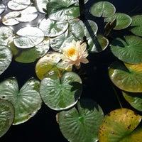 Photo taken at Monet's Garden at The New York Botanical Garden by Tudor L. on 10/20/2012