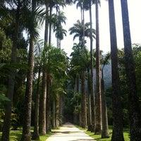 Photo taken at Jardim Botânico do Rio de Janeiro by Rodrigo M. on 3/8/2013