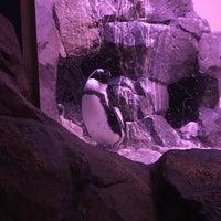 Foto tomada en Inside Penguin Crawl Tube por Andrew M. el 1/4/2017