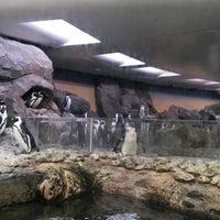 Foto tomada en Inside Penguin Crawl Tube por Andrew M. el 9/6/2016