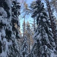 Photo taken at Сертоловский лес by Salima on 2/8/2018