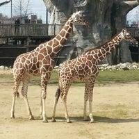 Photo taken at Giraffen by Martyn I. on 4/13/2013