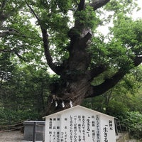 Photo taken at 温泉神社御神木 by takuya i. on 6/29/2017
