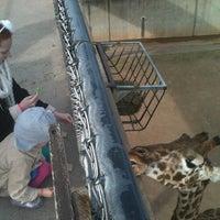 Photo taken at Abilene Zoo by Brandon Scott T. on 12/31/2012