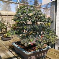 Photo taken at Mistral Bonsai by Javier R. on 4/13/2014