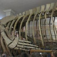 Photo taken at Зоологический музей ОНУ / Zoological Museum ONU by Anastasia K. on 6/13/2014