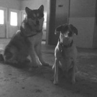 Photo taken at Happy Tails Doggy Daycare by Cullen P. on 8/11/2013