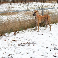 Photo taken at Columbia Dog Park by Erica T. on 11/23/2014