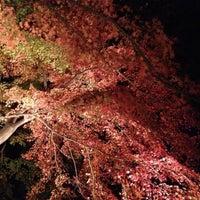 Снимок сделан в Rikugien Gardens пользователем Takashi 11/24/2012