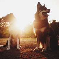 Photo taken at Balboa Park Dog Park by Ryan R. on 7/1/2013