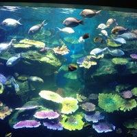 Photo taken at SEA LIFE Bangkok Ocean World by Runglaweeツ on 5/1/2013