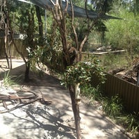 Photo taken at Koala Spotting In The Adelaide Hills by Natalie B. on 1/29/2014