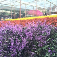 Photo taken at Cameron Lavender Garden by Hui Xuan Y. on 6/12/2014