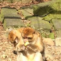 Das Foto wurde bei Tierpark EuregioZoo von Hümeyra G. am 3/25/2017 aufgenommen