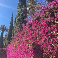Photo taken at Jardín Botánico La Concepción by Svetlana A. on 1/4/2018