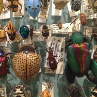 Photo taken at Harvard Museum of Natural History by Jon S. on 1/13/2013