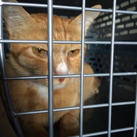 Photo taken at Venice Veterinary Clinic by syameliaaa on 2/2/2016