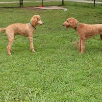 Photo taken at My Dog's Diggin' Dog Park by Gary R. on 7/20/2013