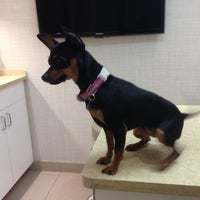 Photo taken at Chelsea Animal Hospital by Nicky D. on 4/27/2013
