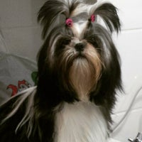 Photo taken at Canil New Dog's by Canil N. on 3/26/2015