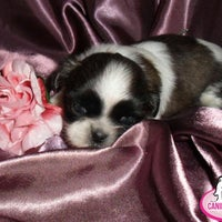 Photo taken at Canil New Dog's by Canil N. on 5/25/2014