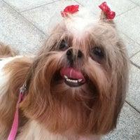 Photo taken at Pet Shop York News by Beatriz F. on 5/13/2014