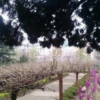 Photo taken at Jiading Wisteria Garden by Ding B. on 3/23/2013