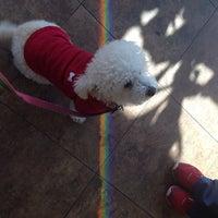 4/3/2014にSara S.がBluePearl Veterinary Partnersで撮った写真