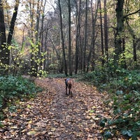 Photo taken at High Woods Country Park by Timothy N. on 11/20/2016