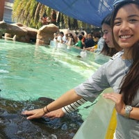 Photo taken at Sharks & Rays Encounter by Christine T. on 1/11/2016