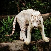 Foto tirada no(a) Singapore Zoo por Jasmine E. em 10/15/2012