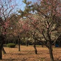 2/24/2018にK T.が代々木公園 南門で撮った写真