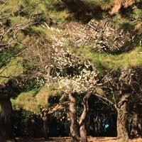 1/21/2017にK T.が代々木公園 南門で撮った写真
