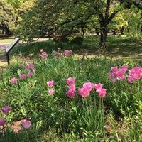 4/29/2017にK T.が代々木公園 南門で撮った写真