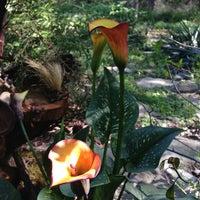 Photo taken at Zilker Botanical Gardens by Ken T. on 3/27/2013